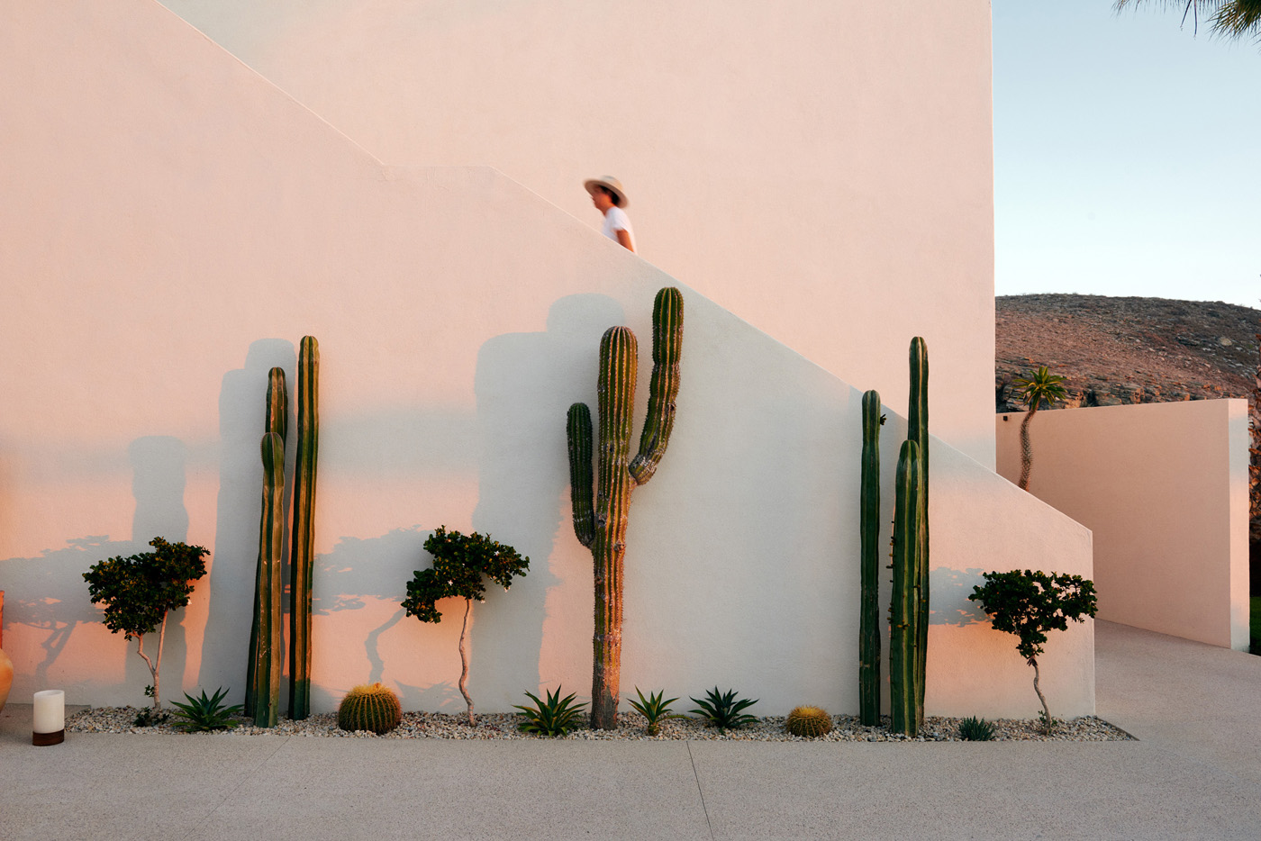 Exterior of hotel with Cacti