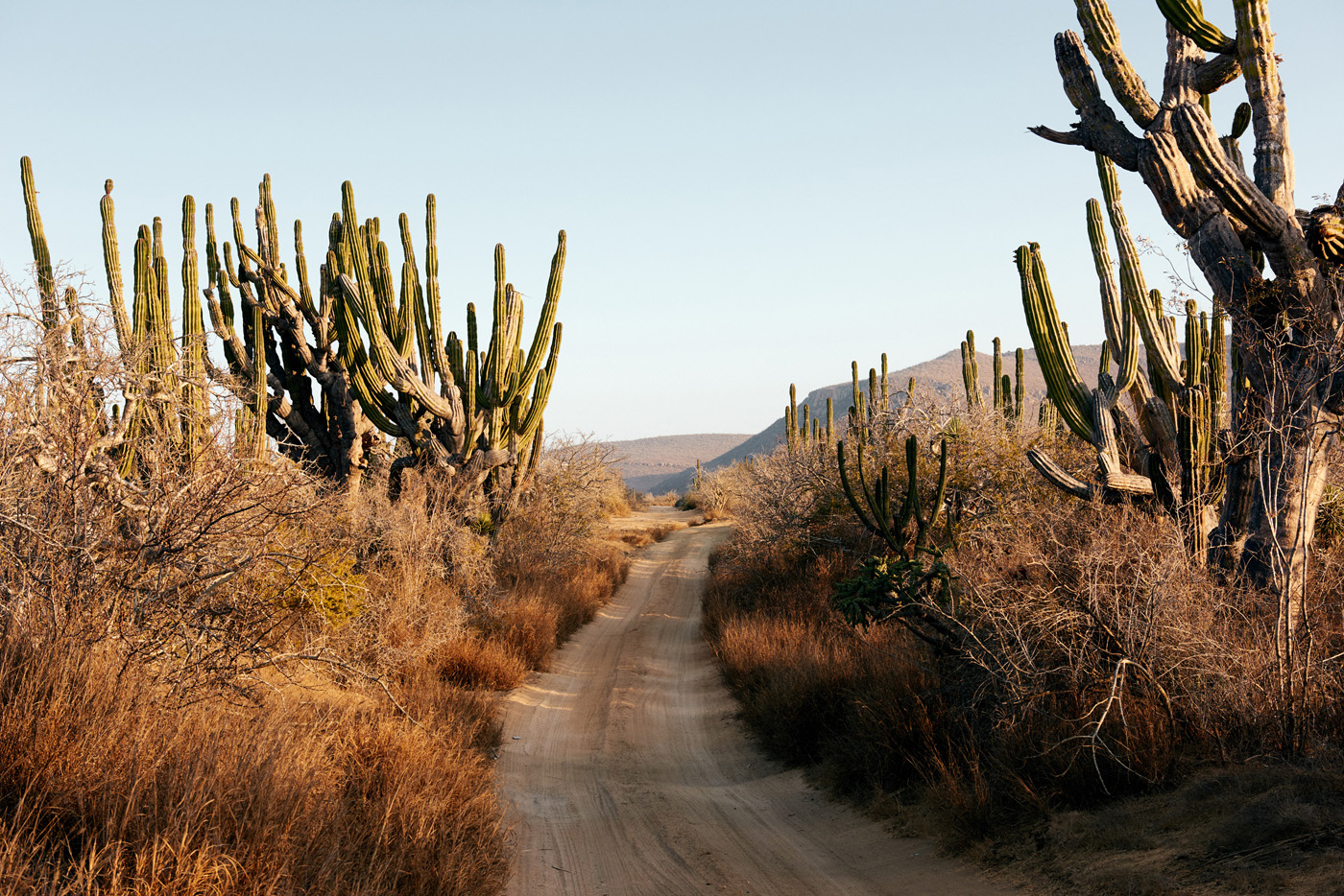Desert Road with Cacti