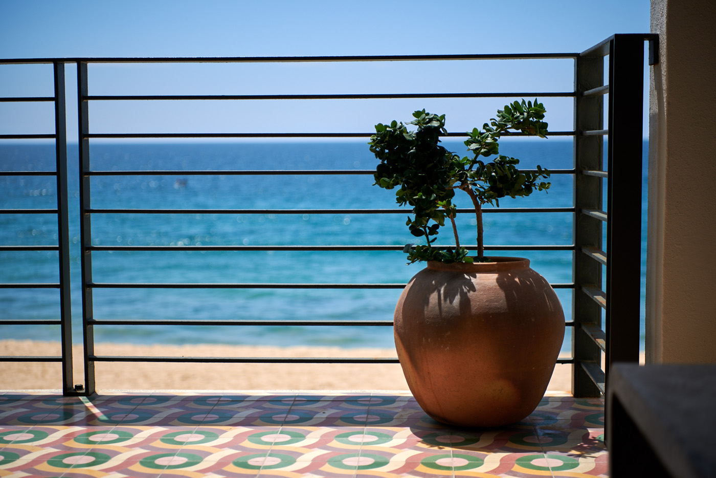 Potted plant with view of ocean